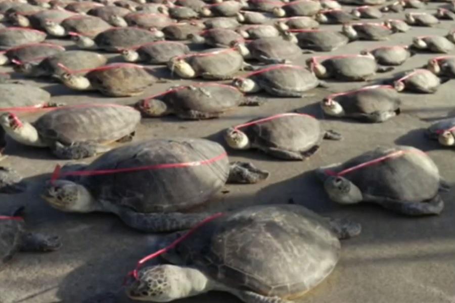 中国人の密漁船によってサンゴ礁が破壊されている